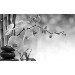 """Фотообои """"Орхидея"""""""