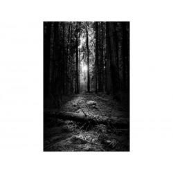 """Фотообои """"Черный лес"""""""