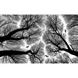 """Фотообои """"Деревья"""""""