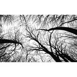 """Фотообои """"Дерево"""""""