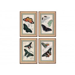 """Серия постеров в раме """"Старинные рисунки. Бабочки"""""""