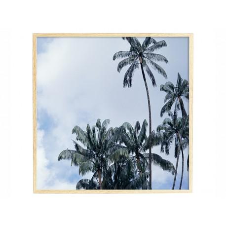 """Постер в раме """"Пальмы"""""""