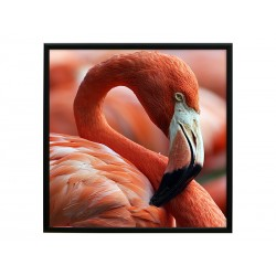 "Постер в раме ""Фламинго"""
