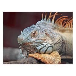 """Скинали """"Iguana"""""""