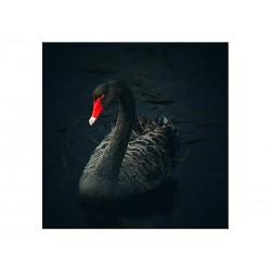 """Скинали """"Черный лебедь"""""""
