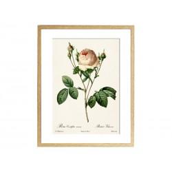 """Постер в раме """"Винтажные розы"""""""