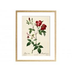 """Постер в раме """"Rose"""""""