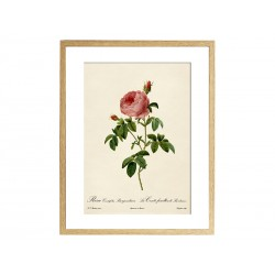 "Постер в раме ""Rosa"""