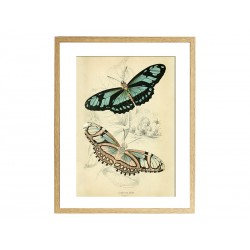 "Постер в раме ""Butterflies"""