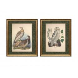 """Серия постеров в раме """"Старинные рисунки птиц"""""""