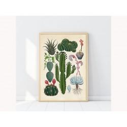 "Постер в раме ""Botanic"""