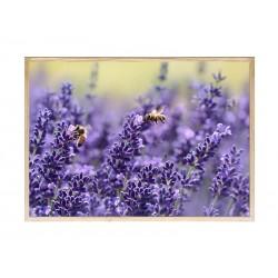 "Постер в раме ""Lavender"""