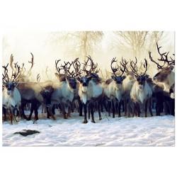"""Постер на стекле """"Deer"""""""