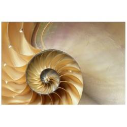 "Постер на склі ""Nautilus"""