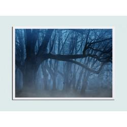 "Постер в раме ""Forest"""