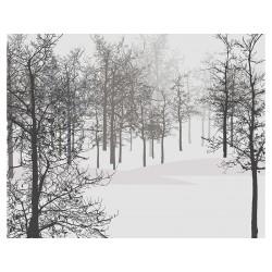 "Фотообои ""Forest"""