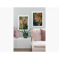 """Серія постерів в рамі """"Protea"""""""