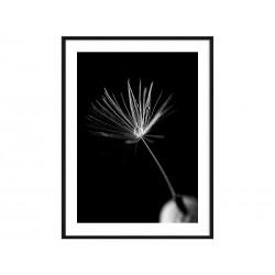 "Постер в раме ""Dandelion"""