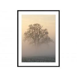"""Постер в раме """"Tree"""""""