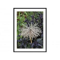 """Постер в раме """"Botany"""""""