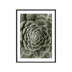 "Постер в раме ""Succulent"""
