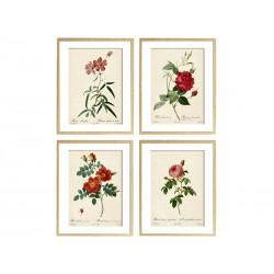 """Серія постерів """"Старовинні малюнки квітів"""""""