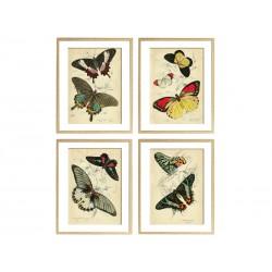 """Серия постеров """"Старинные рисунки бабочек"""""""