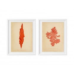 """Серия постеров """"Botanic Seaweed"""""""