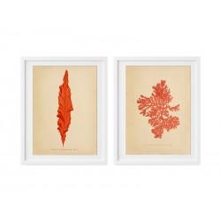 """Серія постерів """"Botanic Seaweed"""""""
