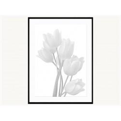 """Постер в рамі """"Tulip"""""""