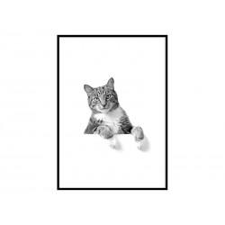 """Постер в рамі """"Кіт"""""""