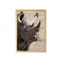 """Постер в рамі """"Чорний носоріг"""""""