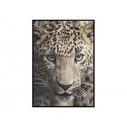 """Постер в рамі """"Леопард"""""""