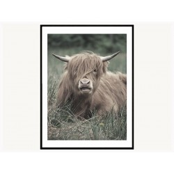 """Постер в рамі """"Шотландський бик"""""""