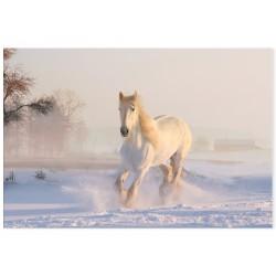 "Фотокартина ""Horse"""