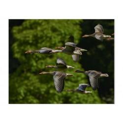 """Фотокартина """"Flock"""""""