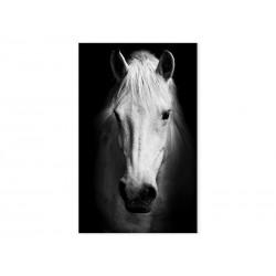 """Фотокартина """"Білий кінь"""""""