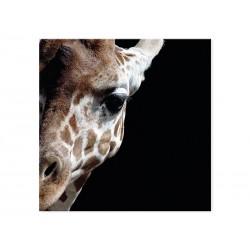 """Фотокартина """"Жираф"""""""