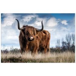 """Фотокартина """"Шотландський бик"""""""