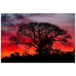 """Фотокартина """"Дерево"""""""