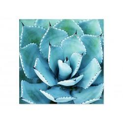 """Фотокартина """"Succulent"""""""