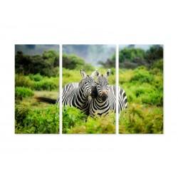 "Модульна картина ""Zebra"""