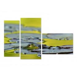 "Модульна картина ""Green Frog"""