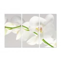 """Модульна фотокартина """"Біла орхідея"""""""