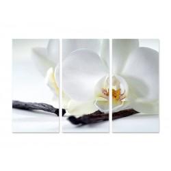 """Модульна картина """"Біла орхідея"""""""