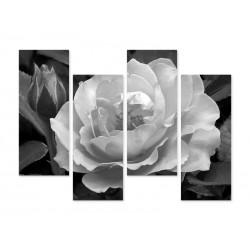 """Модульна фотокартина """"Троянда"""""""