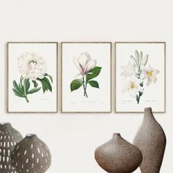 """Серія постерів в рамках """"Старовинні малюнки. Квіти"""""""