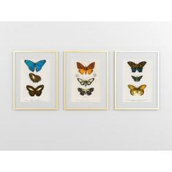 """Серія постерів """"Старовинні малюнки метеликів"""""""