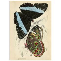 """Постер """"Butterfly. Botany"""""""