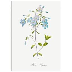"""Постер """"Flowers. Botany"""""""
